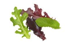 Lames gastronomes de salade d'isolement Image libre de droits
