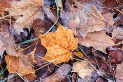 Lames givrées d'automne photos stock