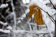 Lames glaciales Image stock
