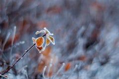 Lames glaciales Images libres de droits