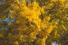 Lames jaunes et d'orange Fond d'automne Fond de chute Image stock