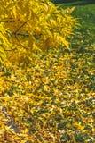 Lames jaunes et d'orange Fond d'automne Fond de chute Photos stock