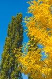 Lames jaunes et d'orange Fond d'automne Fond de chute Image libre de droits