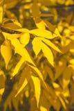 Lames jaunes et d'orange Fond d'automne Fond de chute Photo stock