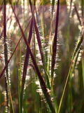 Lames lumineuses d'herbe image stock