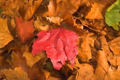 Lames pendant la saison d'automne images libres de droits