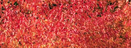 Lames rouges et jaunes Photo stock