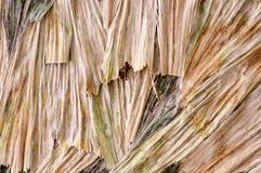 Lames sèches Image libre de droits