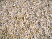 Lames sèches tombées Photos stock