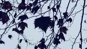 Lames sur l'arbre Photographie stock