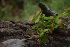 Lames sur l'arbre Photo stock