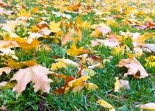 Lames sur l'herbe verte Image stock