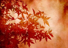 Lames texturisées de sweetgum en automne Images libres de droits