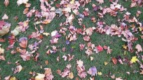 Lames tombées d'automne Photos stock