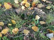 Lames tombées par automne photos stock
