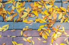 Lames tombées par automne sur le trottoir Images stock