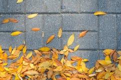 Lames tombées par automne sur le trottoir Image libre de droits