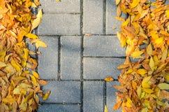 Lames tombées par automne sur le trottoir Photos stock