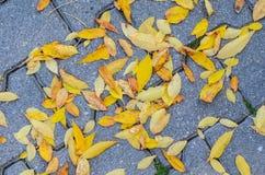 Lames tombées par automne sur le trottoir Photos libres de droits