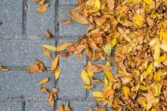 Lames tombées par automne sur le trottoir Photo stock