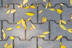 Lames tombées par automne sur le trottoir Photo libre de droits