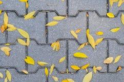 Lames tombées par automne sur le trottoir Image stock