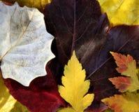 Lames toujours des lames d'automne Images libres de droits