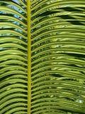 Lames tropicales Photos libres de droits