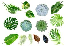 Lames tropicales de vert Photo libre de droits