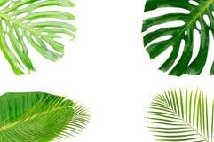 Lames tropicales de vert Images libres de droits