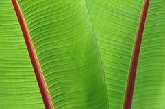 Lames tropicales de vert Image stock