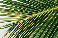 Lames tropicales vertes Photos stock