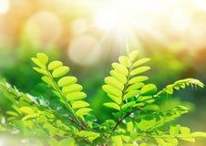 Lames vert clair Photos libres de droits