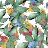 Lames vertes d'érable Feuillage floral de jardin botanique d'usine de feuille Modèle sans couture de fond Illustration Stock