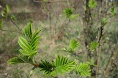 Lames vertes d'arbre Image stock