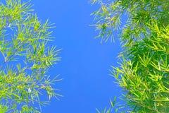 Lames vertes de bambou Photo libre de droits