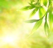 Lames vertes de bambou Photos stock