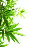 Lames vertes de bambou sur un fond blanc Image stock