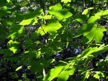 Lames vertes de forêt Photos libres de droits