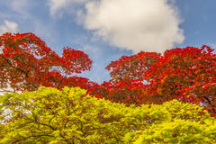 Lames vertes et de rouge Photo libre de droits