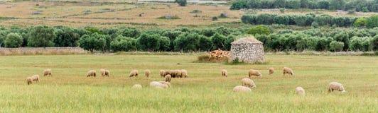 Lamie Trullo y ovejas en el campo de Salento Italia foto de archivo