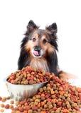 Lamiendo el perro con derramar el alimento Foto de archivo
