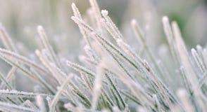 Lamierina di erba in inverno fotografie stock libere da diritti
