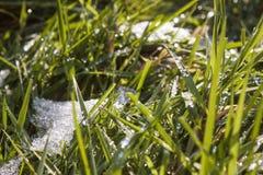 Lamierine di erba ghiacciate Immagine Stock Libera da Diritti