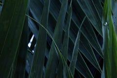 Lamierine di erba verdi Fotografia Stock Libera da Diritti