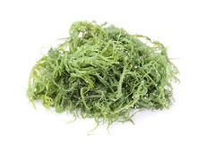 Laminaria (Kelp) Seaweed Stock Photography
