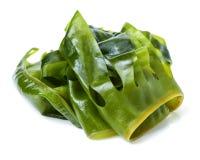 Laminaria kelp of seaweed. Isolated on white background stock image