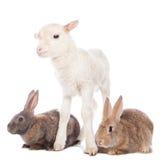 Lamm und Kaninchen Stockfoto