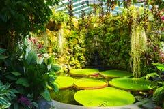 LaMortella trädgård Royaltyfri Fotografi