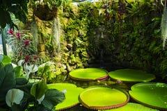 LaMortella trädgård Arkivbild